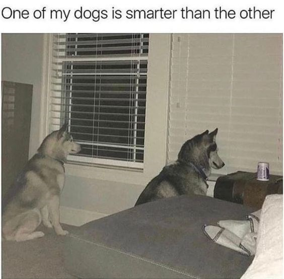 one dog that is smarter than the other.