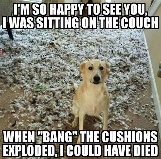 Meme of dog making up excuses as to why the couch is all over the place.