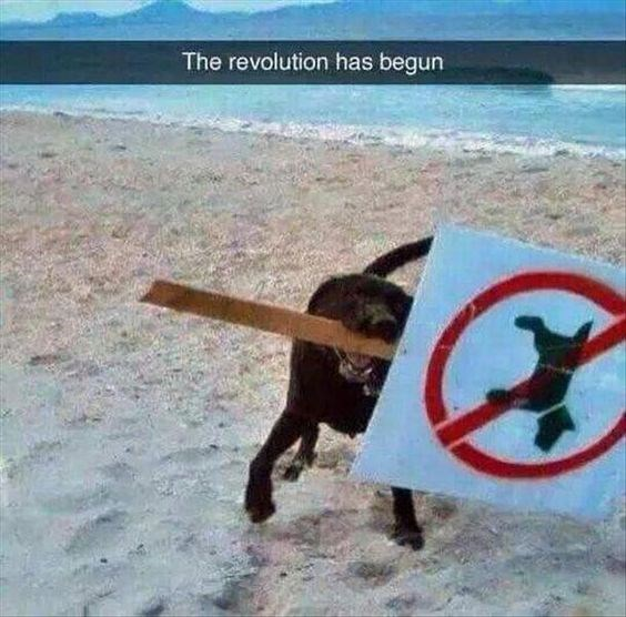 Snapchat of a sign saying NO DOGS being carried off by a dog, caption reads The Revolution Has Begun
