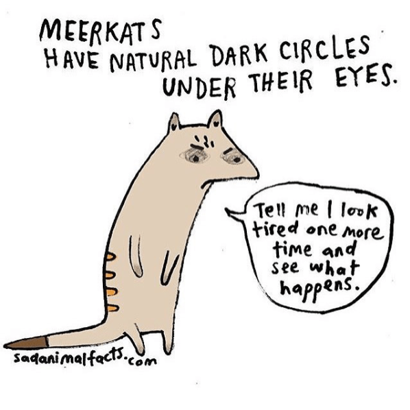 Text - MEERKATS HAVE NATURAL DARK CIRCLES UNDER THEIR EYES Tell me lok tired one more time and see what happens Sadanimalfecs.com