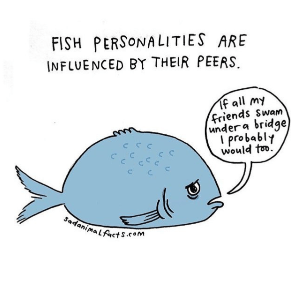Fish - FISH PERSONALITIES ARE INFLUENCED BY THEIR PEERS. Tf all my friends Swam undera bridge probably would too C SadanimaLfacts.com