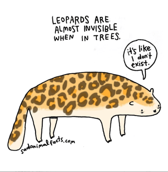 Organism - LEOPARDS ARE ALMOST INVISIBLE WHEN IN TRE ES it's like I don't exist gadanimalfacts com
