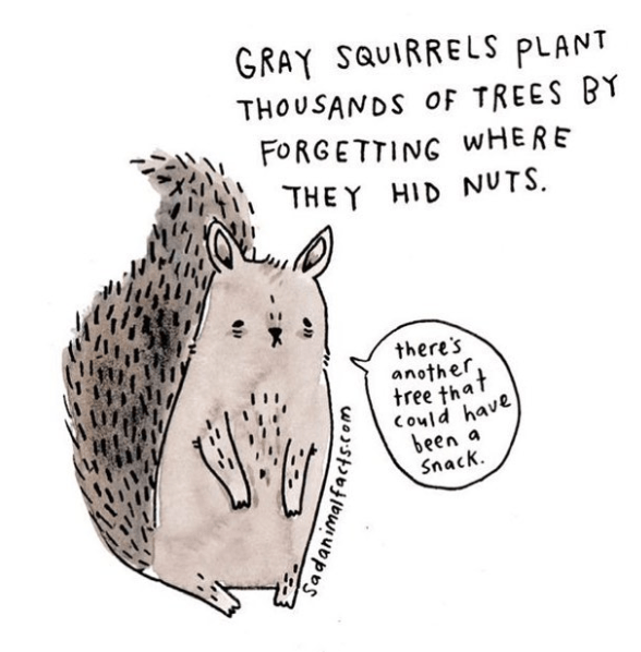 Text - GRAY SQUIRRELS PLANT THOUSANDS OF TREES BY FORGETTING WHERE THEY HID NUTS there's another tree that Could have been a Snack