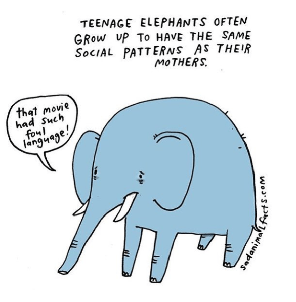 Elephant - TEENAGE ELEPHANTS OFTEN GROW UP To HAVE THE SAME SOCIAL PATT ERNS AS THEIR MOTHERS that movie had Such foul langyage! wost owiupos