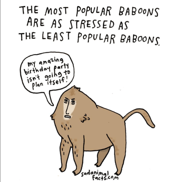 Cartoon - THE MOST POPULAR BABOONS ARE AS STRESSED AS THE LEAST POPULAR BABOONS my amazing birthday part isn't goihg to Plan itseif sadanimgl, facts.com 18)