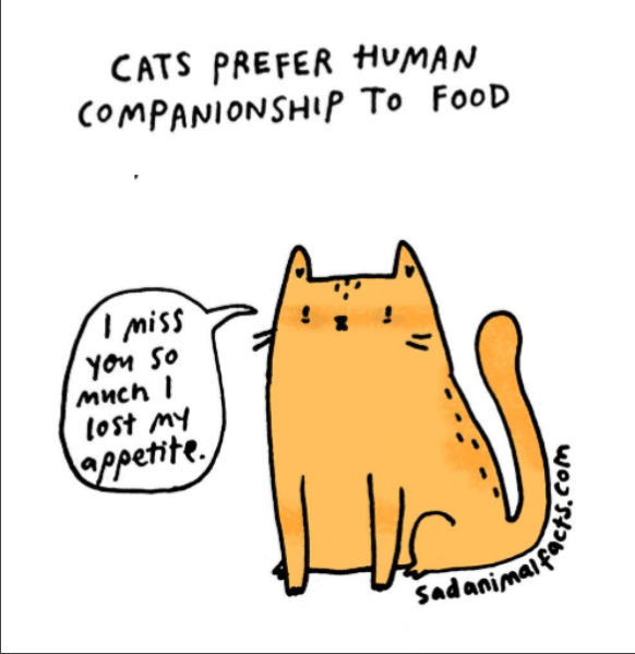Text - CATS PREFER HUMAN COMPANIONSHIP To FooD I miss Yon So Much I lost my ppetite Sadanima wosth