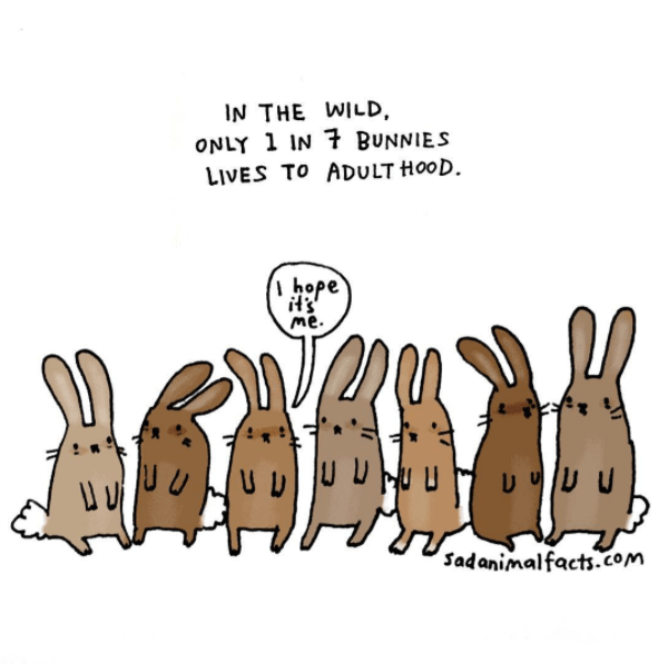 Cartoon - IN THE WILD ONLY 1 IN 7 BUNNIES LIVES TO ADULT HOOD hope it's me. UU Sadanimalfacts.com