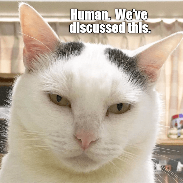 Cat is not happy with you, says we've discussed this before.