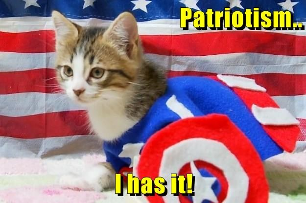 Cat pain american - captain america cat has patriotism