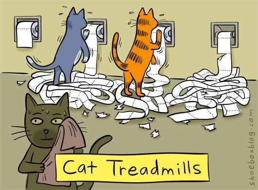 photo of cats treadmills from toilet paper rolls
