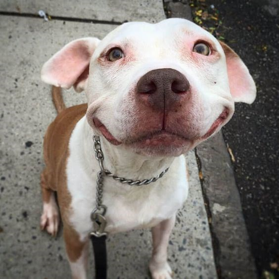 very cute smiling dog