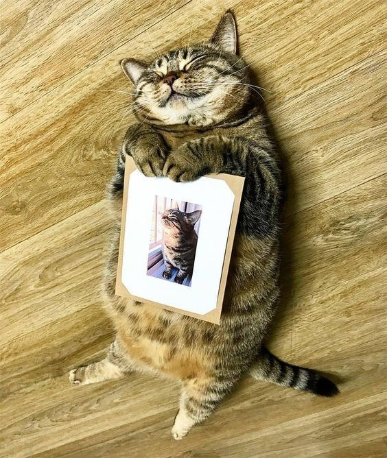 cat on the floor lying down on his back and smiling while holding a selfie printout.