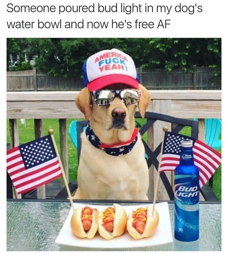 Funny meme with a dog dressed patriotically, saying he drank budweiser.
