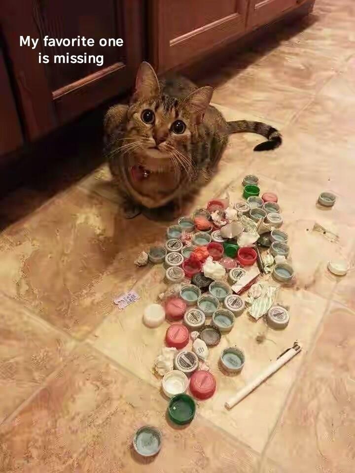 cat meme - Cat - My favorite one is missing