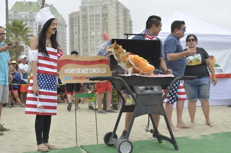 Corgi dressed as a hot dog on a BBQ at California Corgi Day