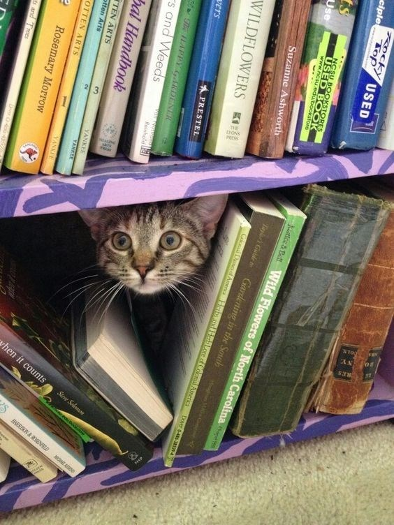 cat hiding in a book case