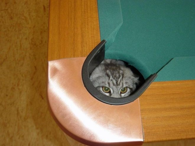 cat hiding in the corner pocket of a pool table