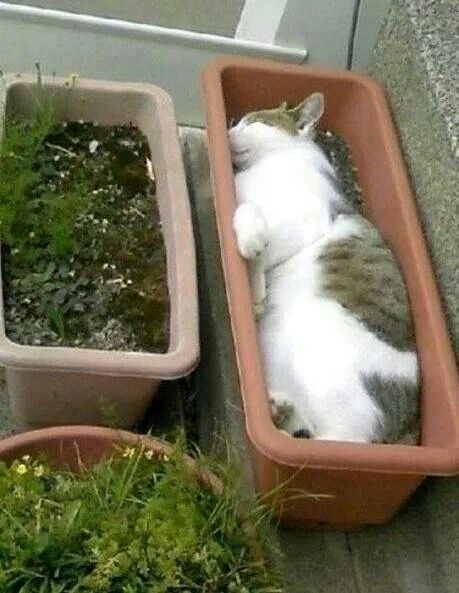 Cat sleeping in a rectangular flower pot