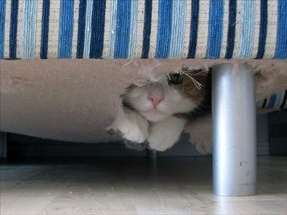 cat making a hiding hammock out of the inside of the couch