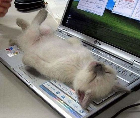 cat taking a nap passed out atop a laptop computer