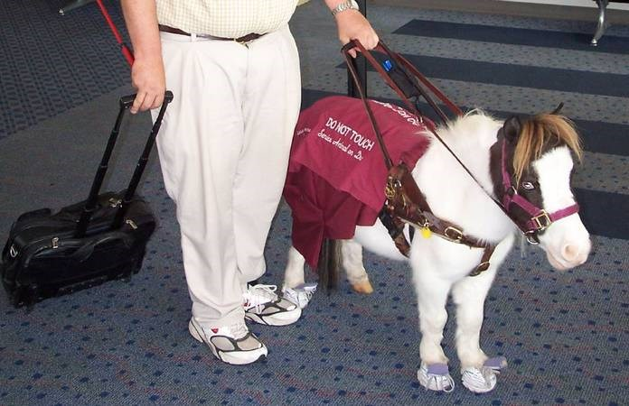 miniature horses are allowed to be emotional support animals