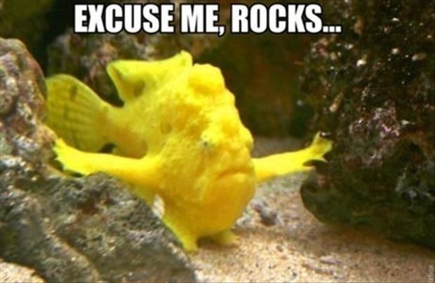 Underwater - EXCUSE ME, ROCKS...