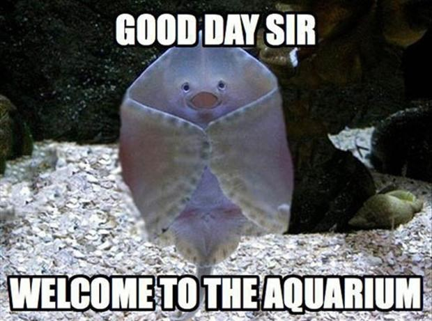 Photo caption - GOOD DAY SIR WELCOME TOTHE AQUARIUM
