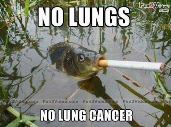 Fish - Fun2Vidco NO LUNGS com avideo.com Fun2Video.com Fun2Video com Fun2Videotcom NO LUNG CANCER
