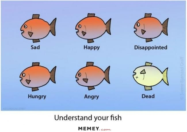 Sad Happy Disappointed Dead Hungry Angry Understand your fish MEMEY. com e pessiolB