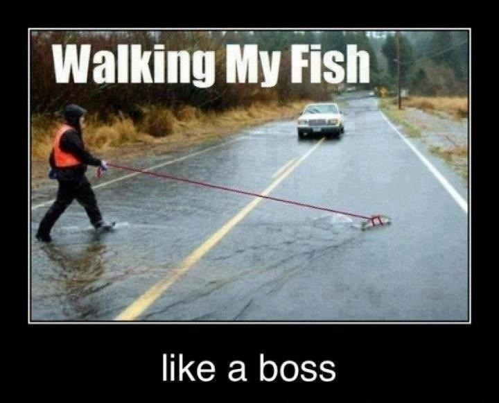 Asphalt - Walking My Fish like a boss