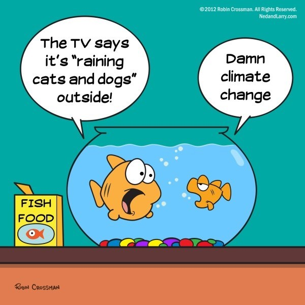 "Cartoon - @2012 Robin Crossman. All Rights Reserved. NedandLarry.com The TV says it's ""raining cats and dogs"" outside! Damn climate change FISH FOOD RoBN CROSSMAN"