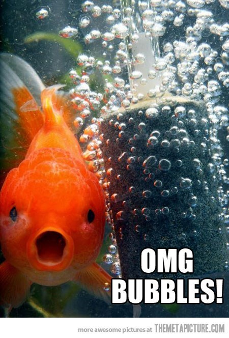 Fish - OMG BUBBLES! more awesome pictures at THEMETAPICTURE.COM