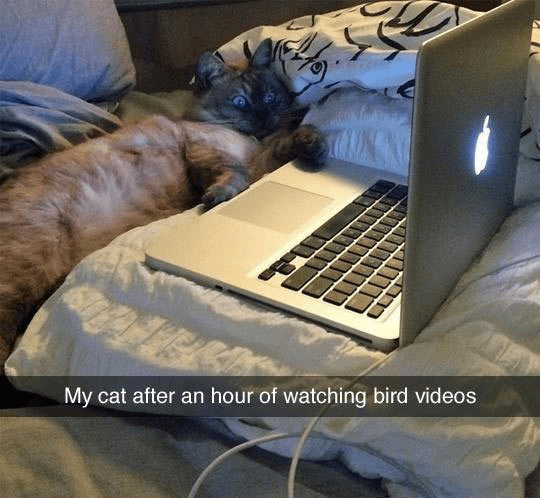 a funny snap of a cat watching videos of birds