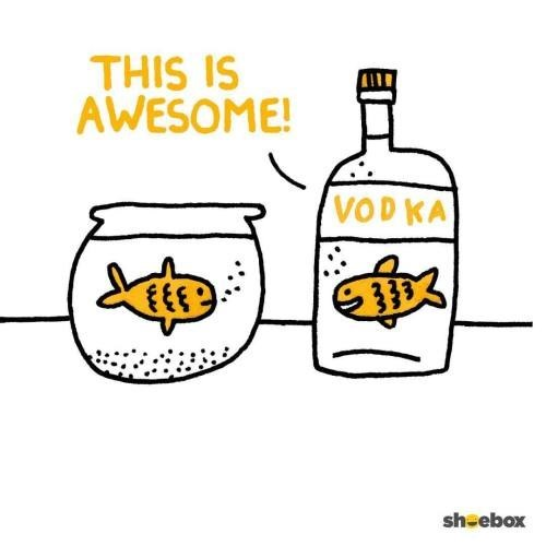 THIS IS AWESOME! VODKA 333 sheebox