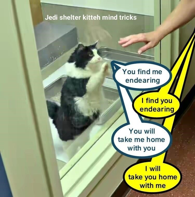 a very funny meme of a kitten in the shelter playing jedi mind tricks to get adopted