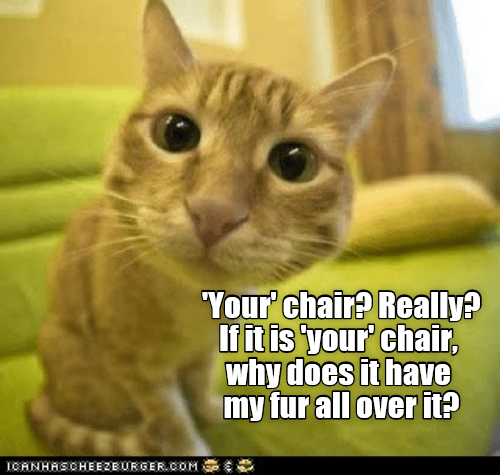 a funny meme of a cat telling off a human that if its really his chair why does it have all his fur on it?