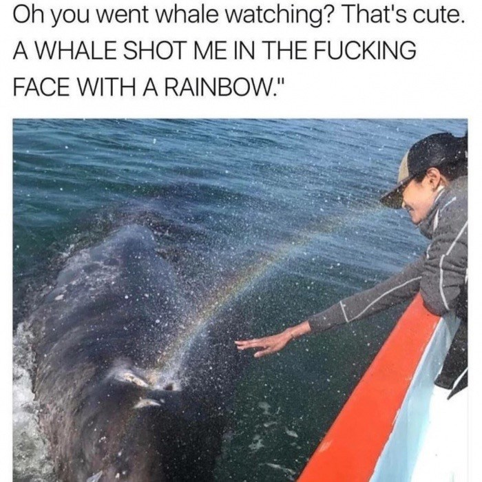 """Recreation - Oh you went whale watching? That's cute. A WHALE SHOT ME IN THE FUCKING FACE WITH A RAINBOW."""""""