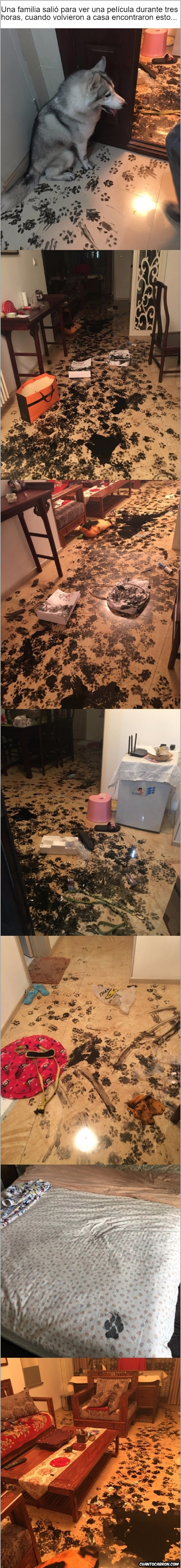 fotos del desastre que hizo un perro al que dejaron solo en la casa