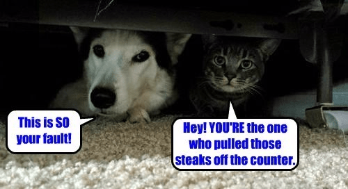 Funny meme of cat and dog hiding under the bed and blaming each other for their current predicament.