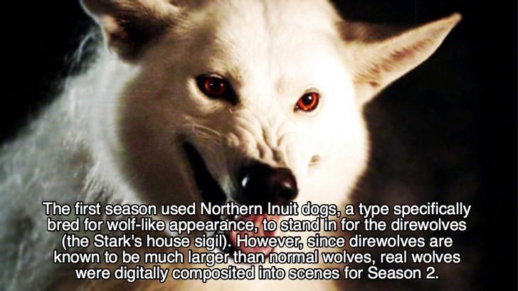 Canidae - The first season used Northern Inuit dogs, a type specifically bred for wolf-like appearance, to stand in for the direwolves (the Stark's house sigil). However, since direwolves are known to be much larger than normal wolves, real wolves were digitally composited into scenes for Season 2.