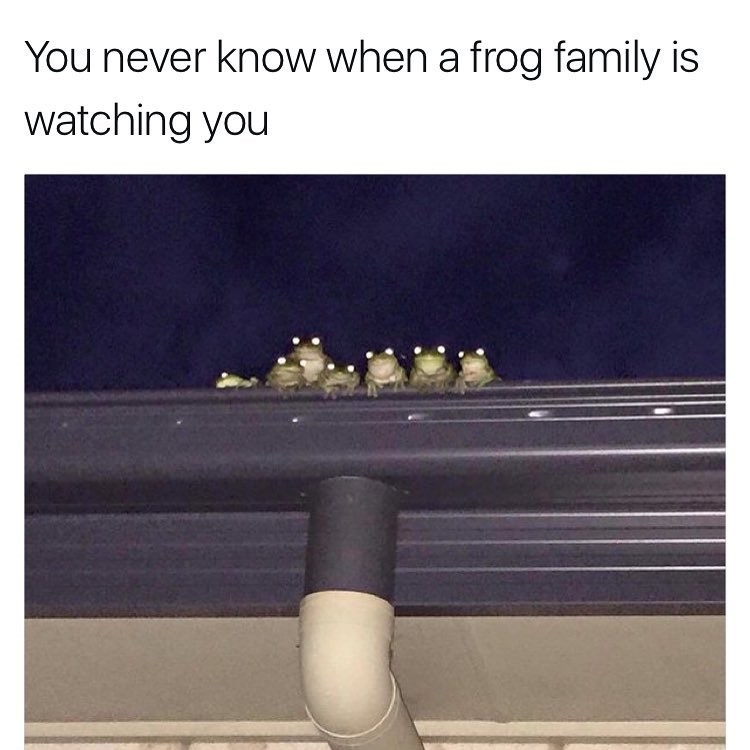 Text - You never know when a frog family is watching you