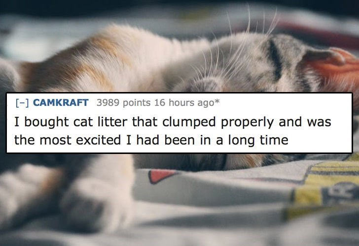 Photo caption - - CAMKRAFT 3989 points 16 hours ago* I bought cat litter that clumped properly and was the most excited I had been in a long time