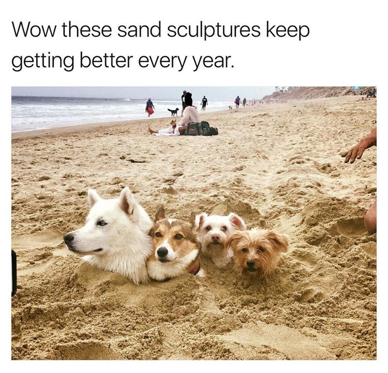 Funny meme about how far sand sculptures have come, a bunch of sand colored dogs buried in the ground.