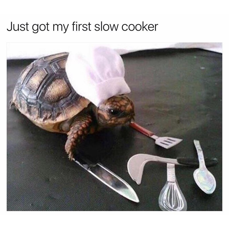 Funny meme about a slow cooker, photo of a tortoise in a chef hat with cooking instruments around him.