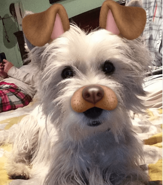 dog with snap chat filter of dog nose