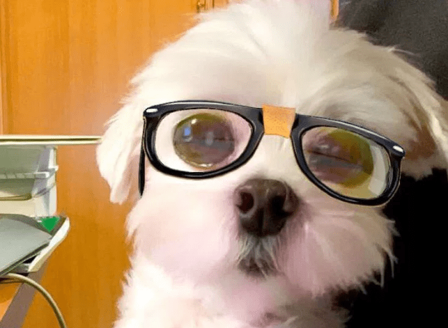 These 18 Dogs Know How To Use Snapchat Filters To Their