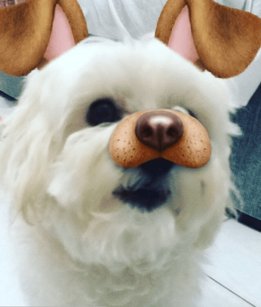 Doggie dogged dog on snapchat