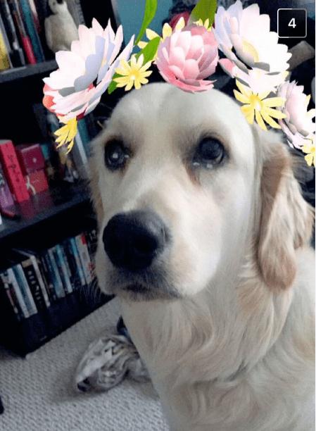 Dog flower princess on snapchat