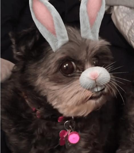 Bunny dog snapchat mutant