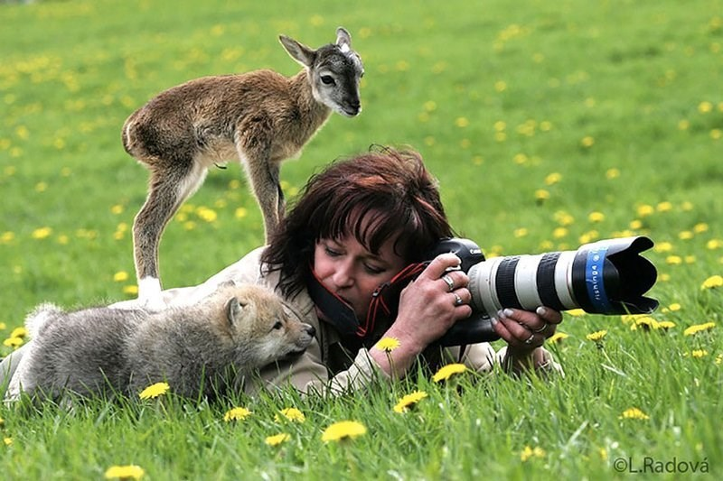 Woman photographer with large zoom lens playing with curious animals crawling on her.